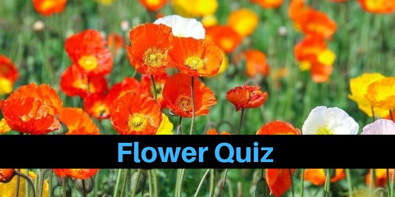 A flower related quiz for you to lighten up your mood