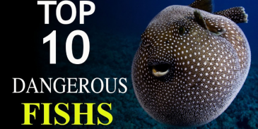Take this quiz and see how well you these 10 Dangerous Fish?