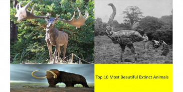 Take this quiz and see how well you know about 10 extinct animals?