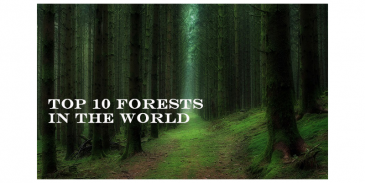 Take this quiz and see how well you know about The Top 10 Forests in the World?