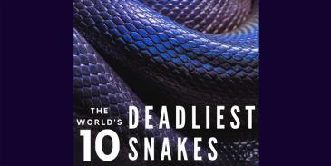 Take this quiz and see how well you know about these top 10 deadliest and most dangerous snakes in the world?