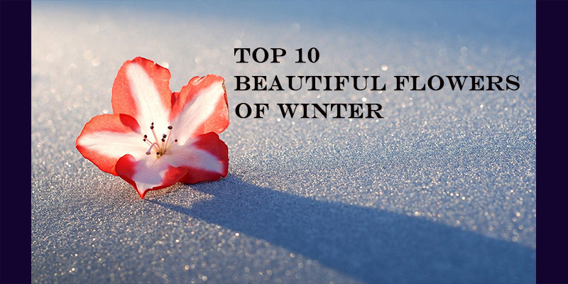 Take this quiz and see how well you know about winter's beautiful flowers?