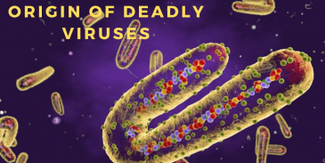 Take this quiz and see the origin of deadly viruses across the world?