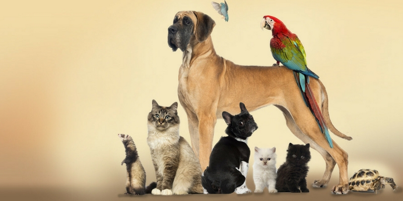 We can guess your favourite pet based on these questions