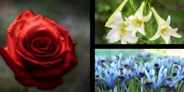 We can guess the flower that best reflects your soul