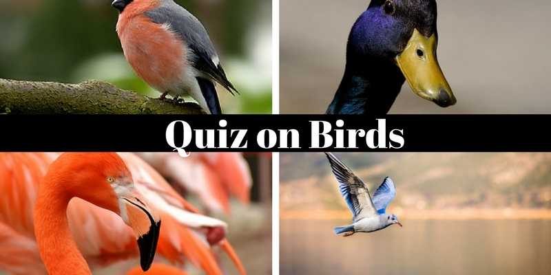 A Ornithologist can clear full marks in this quiz on birds