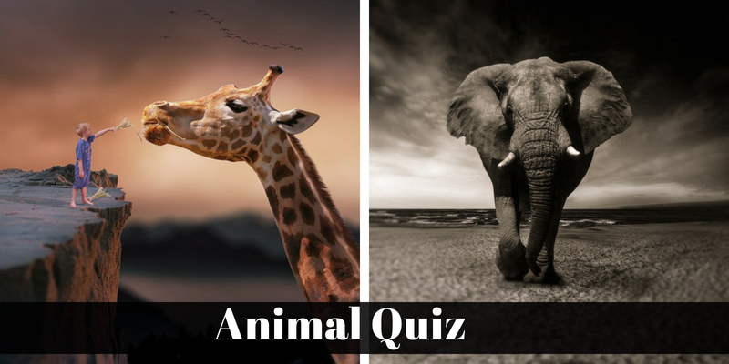 Check out your superlative knowledge regarding animal