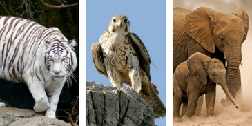 Take this quiz about the national animals of these countries