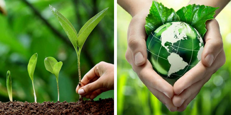 How much do you know about the World Environment Day