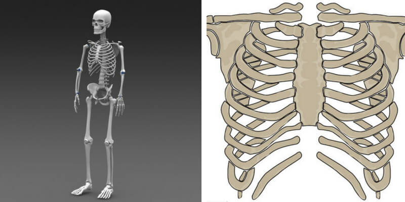 Take this human body bones quiz and check how much you can score